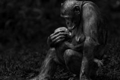 Isabel Muñoz. Serie: Primates.