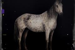 14.Caballo-2-60x60cm-Acrilico-y-lapices-de-colores-sobre-madera-2020