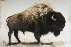 David Morago. Bisonte