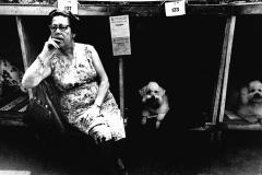 Colita. Concurso de perros en Turó Park. Barcelona 1963